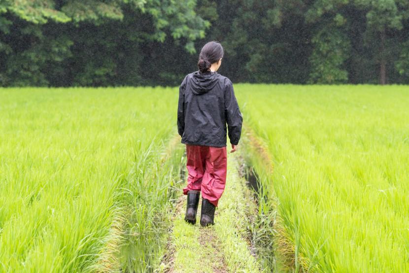 農家の育て方